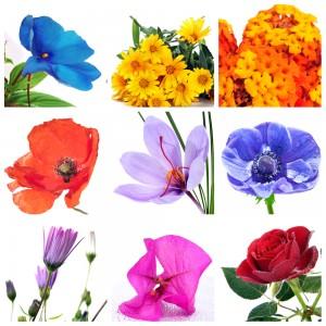 ces noms vous évoquent certainement des doux parfums, des couleurs et des symboles. Quelle est votre connaissance dans le monde des fleurs ?