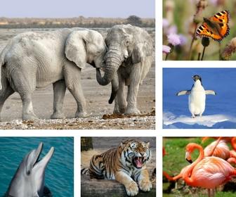 quizz animaux 7